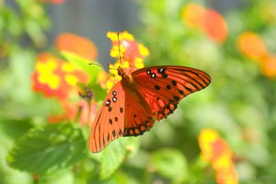Butterfly population numbers plunge across the UK as mass animal die-offs accelerate