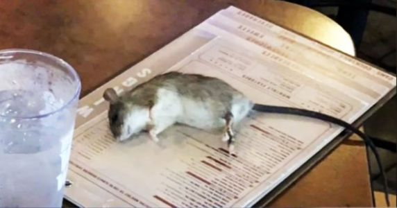 Live Rat Falls From Ceiling And Lands On Customer's Table At Buffalo Wild Wings
