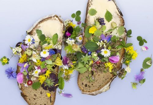 Edible flowers can contribute to daily dose of vitamin E, study suggests