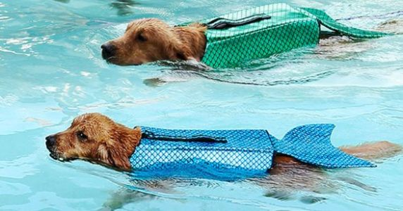 This Mermaid Life Jacket For Dogs Is The Only Pool Accessory You Need This Summer