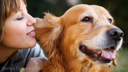 Puppy love: Keep your dog happy and healthy with these 5 easy tips