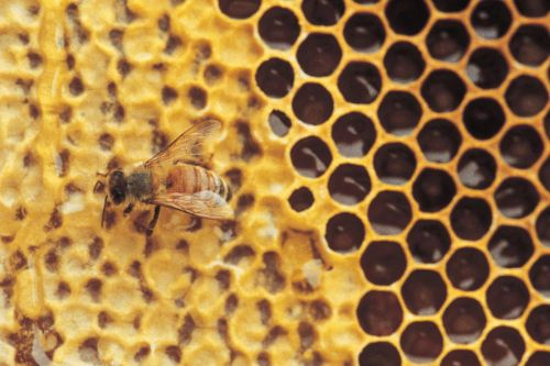Scientists develop new method for easily measuring pesticides in honey