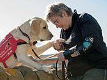 Medical detection dogs lick their diabetic owner's face during a hypo