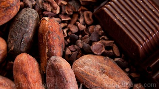 Cure for coughs found in chocolate? Study finds that cocoa is effective cough medicine