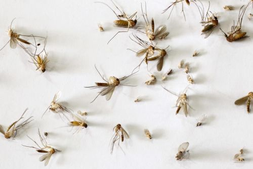West Nile Virus, hepatitis A on the rise in Ohio