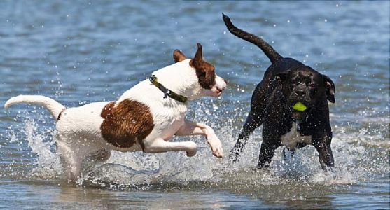 Summer Safety: Saltwater A Lethal Threat to Dogs