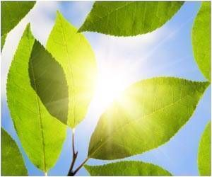 Sunlight Linked With Lower Covid-19 Deaths: Study