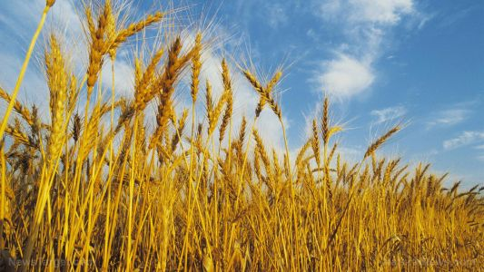 Scientists call for crop diversity to ensure future food security and nutrition