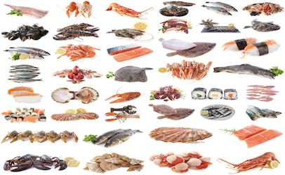 FDA finding could reinstate cross-Atlantic shellfish trade