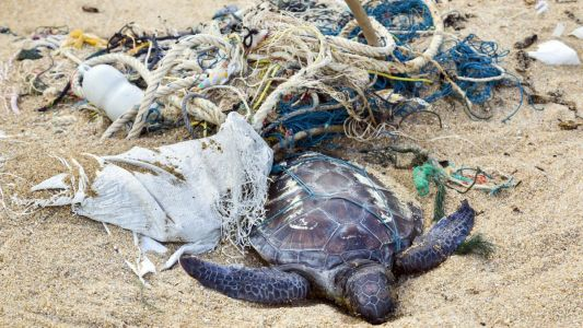 New study finds that 100 PERCENT of sea turtles have plastics in their bellies