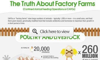 How Factory Farms Pump, Poison and Pollute the Earth