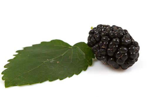 Mulberry leaves can be used to keep diabetes symptoms at bay