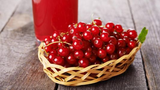 Cranberries prevent cancer and many other chronic diseases