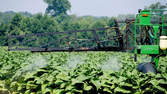 New health threat from tobacco: Researchers plan to grow it for producing vaccines and new pharma drugs