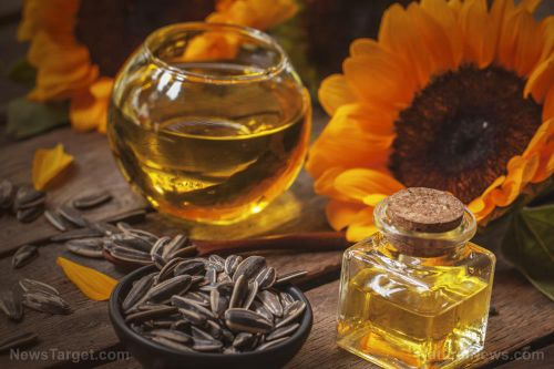 Seed oils are the best choice for people looking to improve their cholesterol