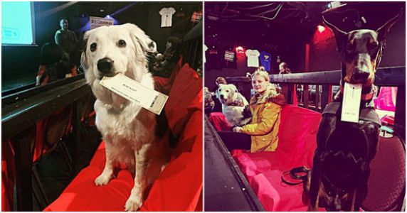 This Movie Theater Allows You To Bring Your Dog And Has Bottomless Wine