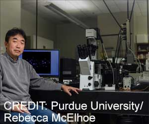 'Time Machine' Offers a Novel Pancreatic Cancer Drug Testing Approach