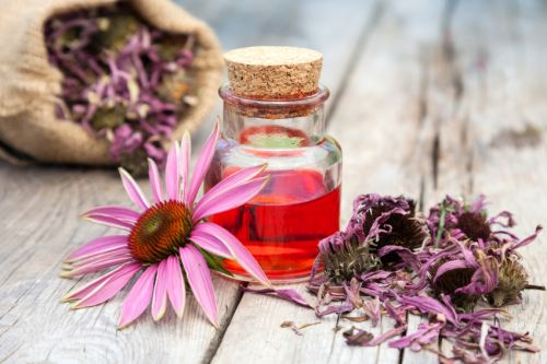 Lack of regulatory 'middle ground' keeps Echinacea from shining in the US, says manufacturer