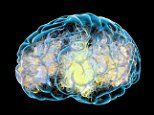 Obesity and diabetes may lead to Alzheimer's by wearing down the LIVER