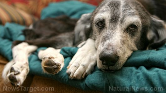 Using homeopathy on animals: Case study of how it saved a disabled dog