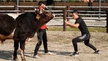 Chinese Fighters Combining Kung Fu With Bullfighting