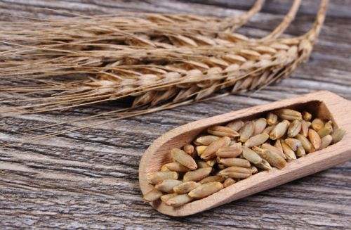 Whole grain rye shown to boost gut health