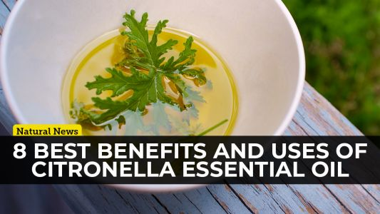 Organic citronella essential oil is one of the most versatile essential oils on the planet