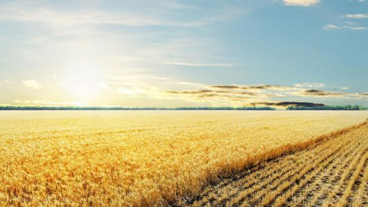 The grass is always greener on the side of conservation agriculture