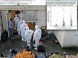 More than 40% of coronavirus cases in US nursing homes are asymptomatic, new study finds