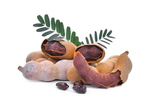 Tamarind more effective than standard analgesics, study shows