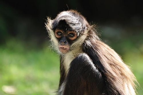 Desperate scientists inject monkeys with coronavirus to create vaccine