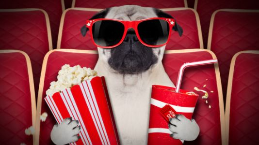 There's Now A Movie Theater For Dogs And Their Humans