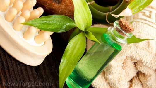 How to make your own natural tea tree massage oil