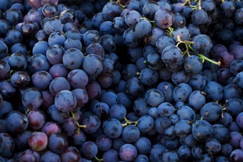 Grape seed extract may reduce fatigue post-exercise, in mice at least