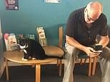 Cardiff Velindre cancer centre cat in hospital health risk to patients