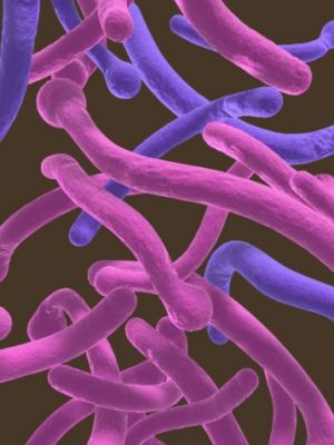 Candida and Diet: Splitting Fact from Fiction
