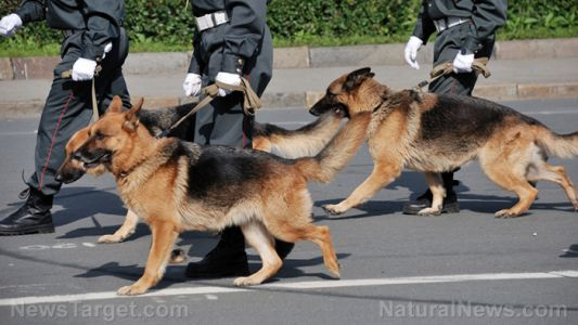 """Media says dogs can sniff covid on a person - can they also identify vaccinated people who are """"shedding?"""""""