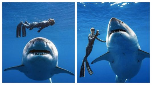 Marine Biologist Swims Alongside A Great White Shark In Jaw-Dropping Photos