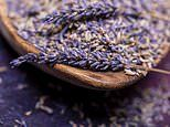 Lavender really is relaxing: The fragrant flower may be a safer alternative to anti-anxiety drugs