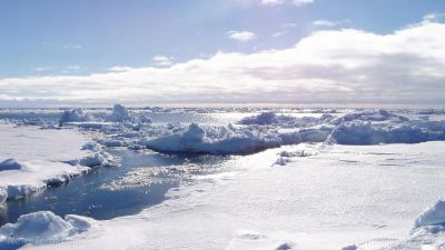 Due to global human pollution, the arctic has become a toxic reservoir of heavy metals, PCBs and other deadly chemicals