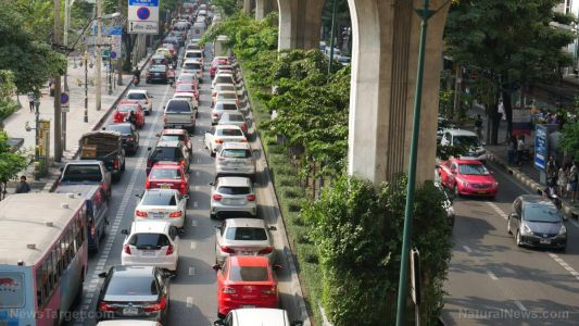 """This pollution-catching """"super plant"""" is ideal for growing beside busy roads, say scientists"""