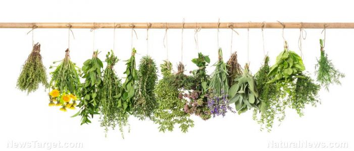 Gain sage-like cognitive function by adding sage to your diet