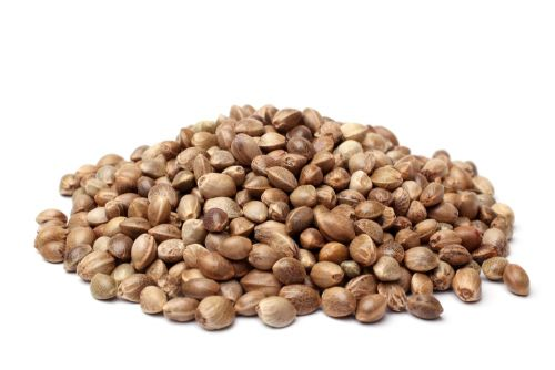 Is Hemp a Good Source of Protein for Building Muscle?