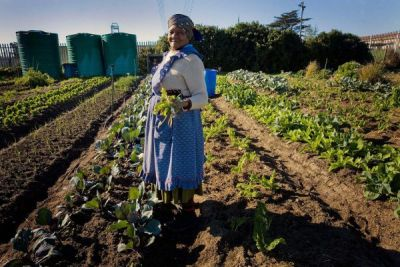 Monsanto and other biotech chemical giants just OUTLAWED seed exchanges in Africa. Seed colonization is nearly complete