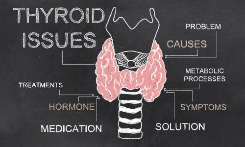 The Impact of Hypothyroidism on the Menstrual Cycle