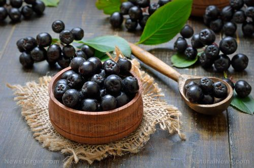 Medicinal food: Aronia berry found to have an anti-diabetic effect