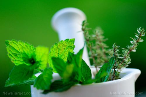 5 Kid-friendly herbs for treating different ailments