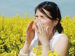SUPER POLLEN could trigger allergy epidemic in Britain