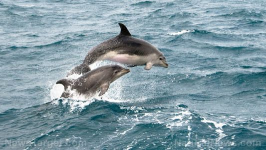 Dolphin dementia: Scientists have discovered that, like us, their brains can deteriorate as they age