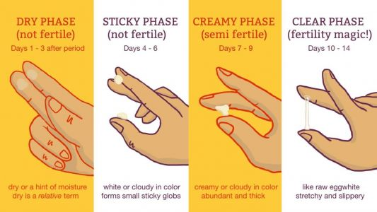 Cervical Mucus Chart: Know When You're Fertile